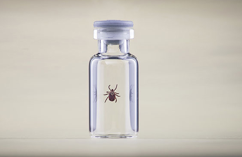 Found a Tick?  Tick Removal and Follow-Up Care