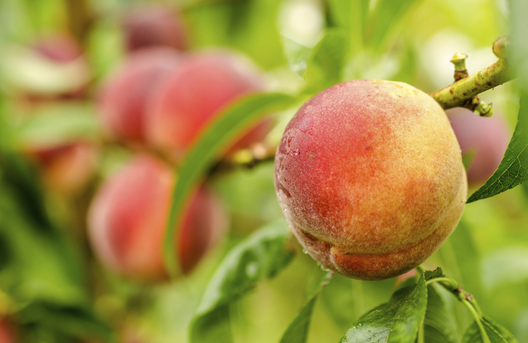 Peaches for you!