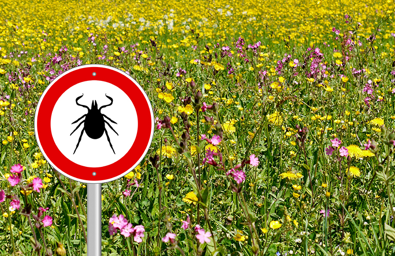 5 Tips to Prevent Tick Bites This Summer