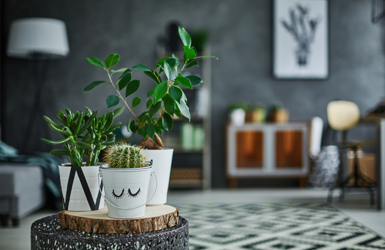 Medical Mythbuster: Are Indoor Plants Good For Your Health?